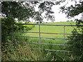 N7086 : Long grass by Richard Webb