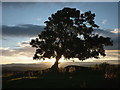 SD4297 : Evening tree by the Dales Way by Karl and Ali