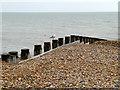TV6198 : Gull on Groyne, East Beach by David Dixon