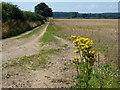 TF7830 : Farm track north of Houghton Hall by Richard Humphrey