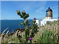 NR5808 : Mull of Kintyre: a thistle by the lighthouse by Chris Downer