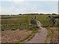 TV5595 : South Downs Way at Birling Gap by David Dixon