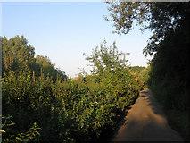 TQ4109 : Lane to Sewage Works by Simon Carey