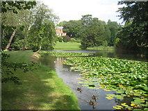 TL7835 : Hedingham Castle Grounds by Derek Voller