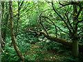 J4877 : Woodland, Clandeboye by Rossographer