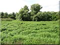 TL1797 : Green space between the railway and the river by Christine Johnstone