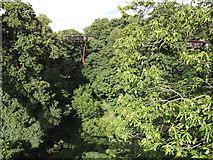 TQ1876 : Treetop Walk by Colin Smith