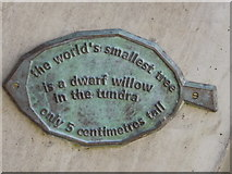TQ1876 : The World's Smallest Tree by Colin Smith
