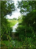 TQ0524 : A stretch of the Wey and Arun Canal south of Wisborough Green by Shazz