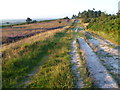 TQ4631 : Heathland and path on Ashdown Forest by Marathon