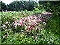 TQ2568 : Summer scene in Mostyn Gardens by Marathon
