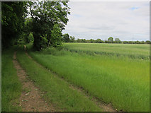 TL2155 : Bridleway from Drewells Lane by Hugh Venables