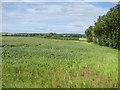 TL2257 : Arable fields by St Neots Road by Hugh Venables