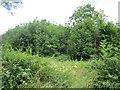 N2663 : Woodland, Newtown by Richard Webb