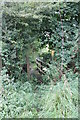 TF0905 : Overgrown entrance to Torpel Way Footpath by J.Hannan-Briggs