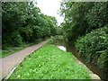 SK3872 : The Chesterfield Canal north of Tapton Mill bridge by Christine Johnstone