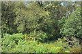 NR7262 : Birch woodland near Kilberry by Steven Brown