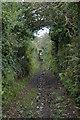 SW5534 : Bridlepath approaching Tremelling by Elizabeth Scott