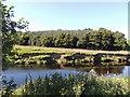 NS2802 : Water of Girvan near Drummochreen by Billy McCrorie