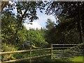 SY2197 : Parehayne Hill by Derek Harper