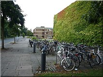 TL4359 : Bicycles at Churchill College by DS Pugh