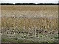 TA0412 : Stubble Field near Newland Hill by David Wright
