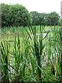 TF6311 : Pond beside Watlington Road by Evelyn Simak
