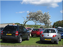 TA1181 : Wind-shaped tree in the car park by Pauline E