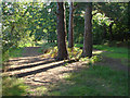 SU8967 : Three pines by Alan Hunt