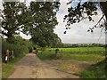 SY2396 : Lane near Umborne by Derek Harper