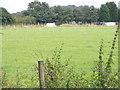 SJ9307 : Heron's Field by Gordon Griffiths