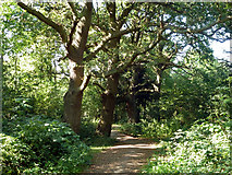 TQ1665 : Stokes Field local nature reserve by Robin Webster