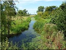 TQ9963 : Ditch at Luddenham Court Farm by pam fray