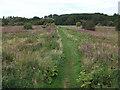 SJ8092 : Chorlton Ees from the Mersey bund by John Rostron