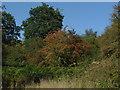 TQ1256 : Hawthorn bush, Bookham Common. by Alan Hunt
