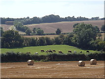 SK7260 : Farmland scene, valley of The Beck by Andrew Hill