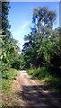 TQ1092 : London Loop in Oxhey Woods by Des Blenkinsopp