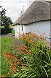 S0004 : View along south elevation of Mick Moore's Cottage, Seemacudda by ethics girl