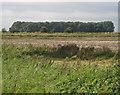 SE9616 : Fox Covert near Saxby Bridge by David Wright