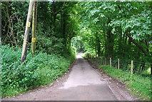 TQ6662 : Holly Hill (North Downs Way) by N Chadwick