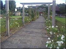 TQ2472 : The pergola in Wimbledon Park by David Howard