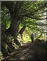 SH7400 : Glyndwr's Way above the Roman steps by Derek Harper