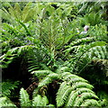 SV8914 : Tresco jungle 1 by Jonathan Billinger