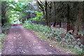 SP9934 : Greensand Ridge Walk in Briar Stockings by Philip Jeffrey