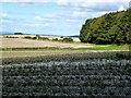 SE8664 : Fields west of Bella Farm by John H Darch