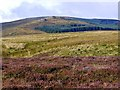 NT9918 : Moorland west of Roddam Burn by Andrew Curtis