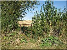 TL6353 : Waymarked footbridge by John Sutton