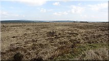 SS8429 : West Anstey Common by Richard Webb