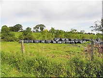 H4761 : Silage bales, Raneese by Kenneth  Allen