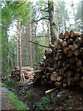 J3629 : Log piles in Donard Wood by Eric Jones